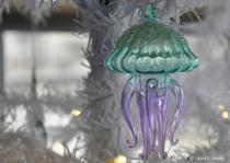 Mini Assignment Jellyfish
