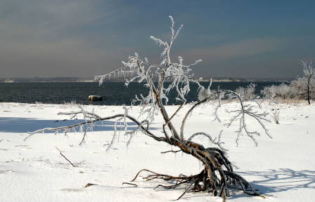 Icy Little Tree