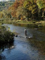 Beavers Bend Fisherman