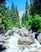 Rocky Mountain Stream in Yosemite Park