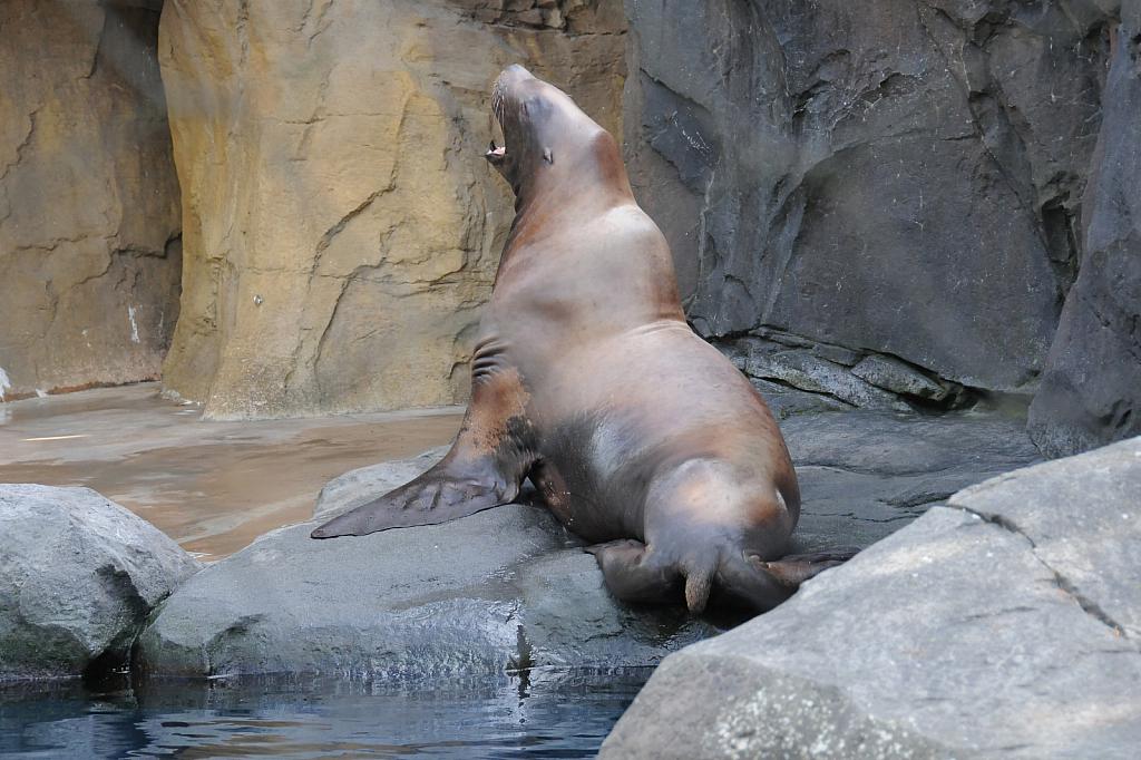 Sea Lion - ID: 15812082 © William S. Briggs