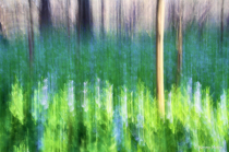 Virginia Bluebells Abstract