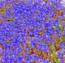 Springtime ground fully bloomed!