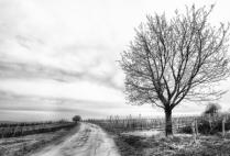 Single Tree Beside the Road