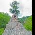 © Elias A. Tyligadas PhotoID# 15811570: The tree on top of the rock.