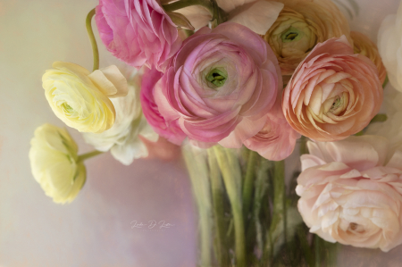 Vase of Ranunculus