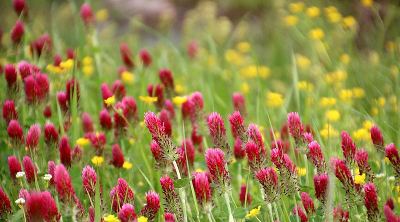Colorful Flowers In Springtime Oklahoma