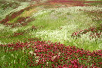 A Colorful Oklahoma Hillside