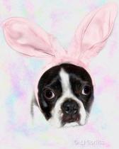 no bunny here!