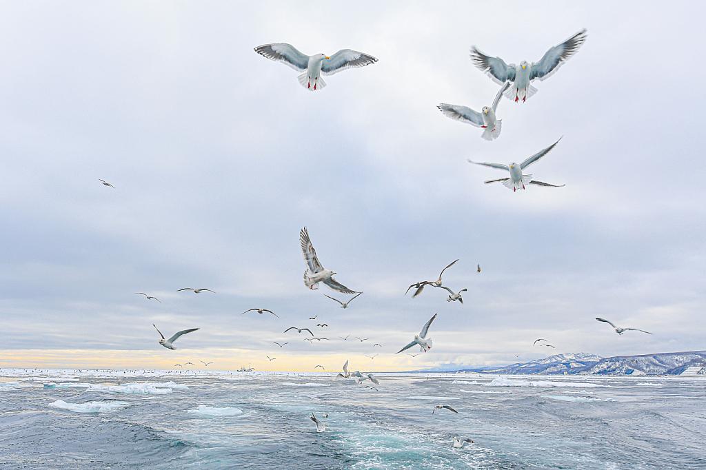 Seagulls Following Our Boat - ID: 15814041 © Kitty R. Kono
