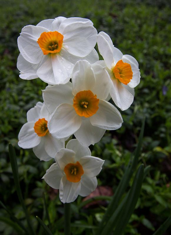 Spring Multiples