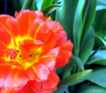 Spring colors 3