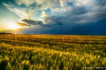 Last glimpse of sun over the wheatfield