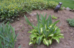 Garden Sitting