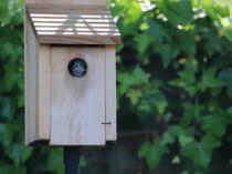 Baby Bluebird peeking out of the nesting box!