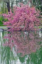 A Springtime Reflection
