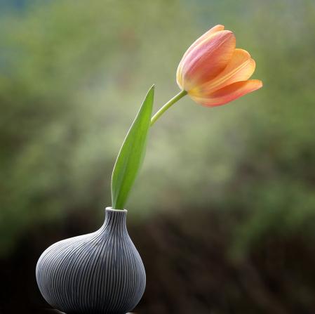 My Favorite Vase With Elegant Tulip