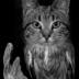 © Theresa Marie Jones PhotoID # 15815718: Owl Cat