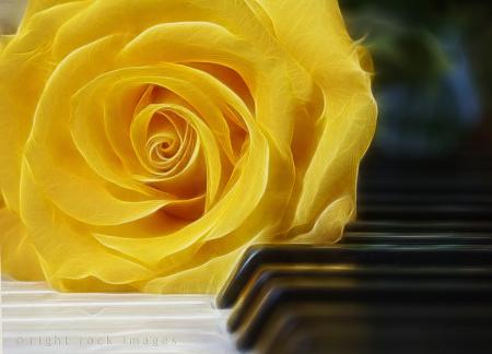 Sonata in Yellow II