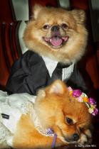 My pet dogs