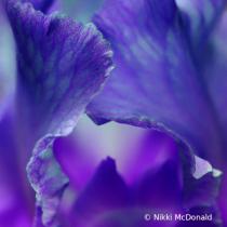 Glimpse of Iris
