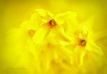 Through the petals