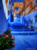 ~ ~ IN THE BLUE CITY ~ ~