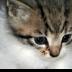 © Theresa Marie Jones PhotoID # 15816625: Cute Kitten