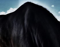 Equine Mountain