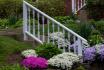 Mid-spring Blooms