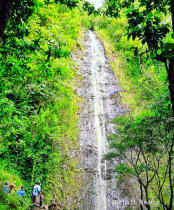 Manoa Rain Forest Water Fall