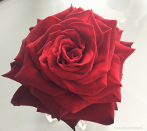 Rose symmetry