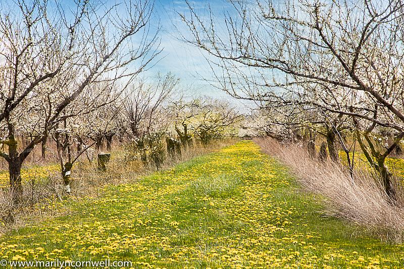 Wabi Sabi Orchard in Niagara - ID: 15817929 © Marilyn Cornwell