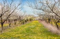 Wabi Sabi Orchard in Niagara