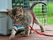 Baby as a kitten