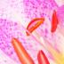 © Elias A. Tyligadas PhotoID# 15817946: Inside anemone flower.