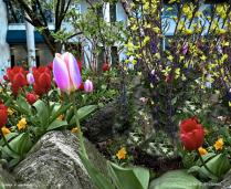 Fairmount Spring