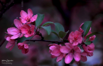 ~ Spring Blossom ~