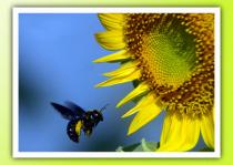 carpaintert in flight and Sun flower