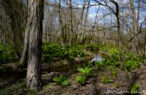 Forest Awakenings
