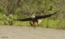Eagle with Catch