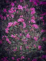 Blossom Glory!