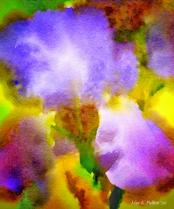 Iris Bright