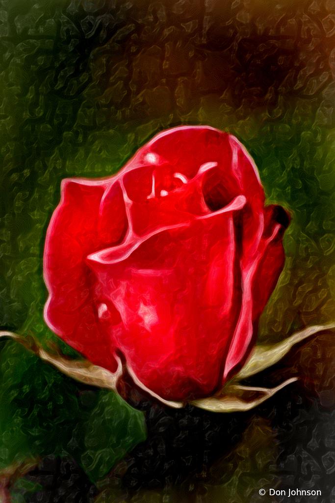 Lovely Artistic 2 Red Rose 4-25-20 212 - ID: 15819156 © Don Johnson