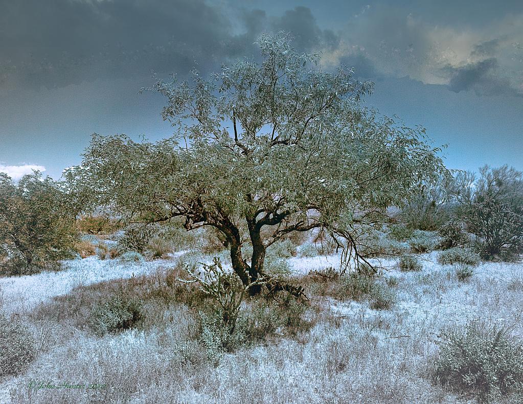 Desert in Infrared