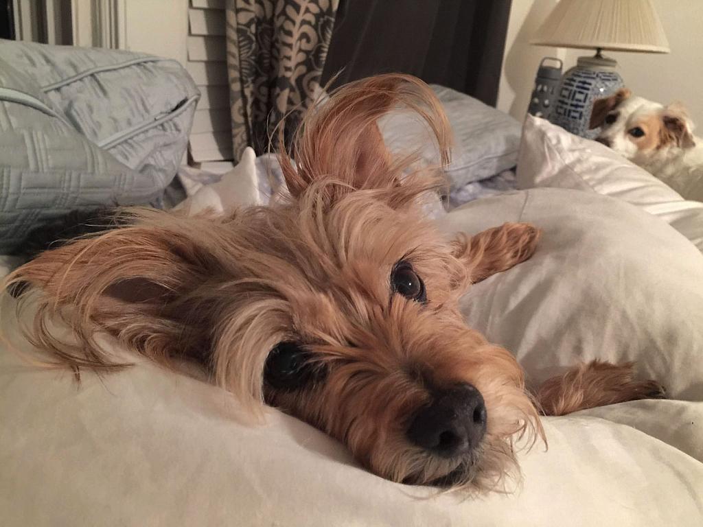 Arlo in Bed