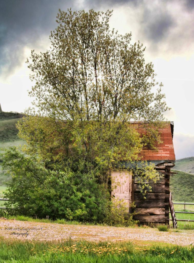 ~ Rural ~