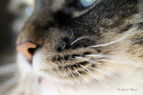 Whisker Close-Up