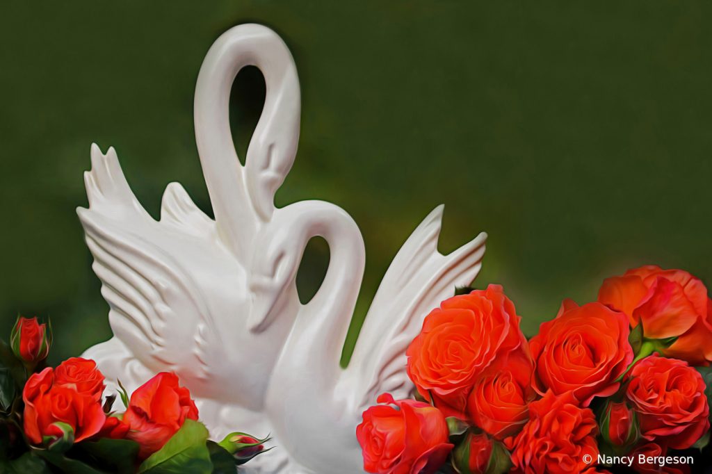 Swans & Roses