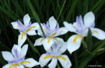 Flowers At Twilight 2